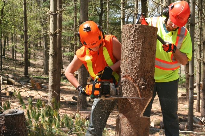 Stephanie from the Arborist program cuts a tree stump with a chainsaw